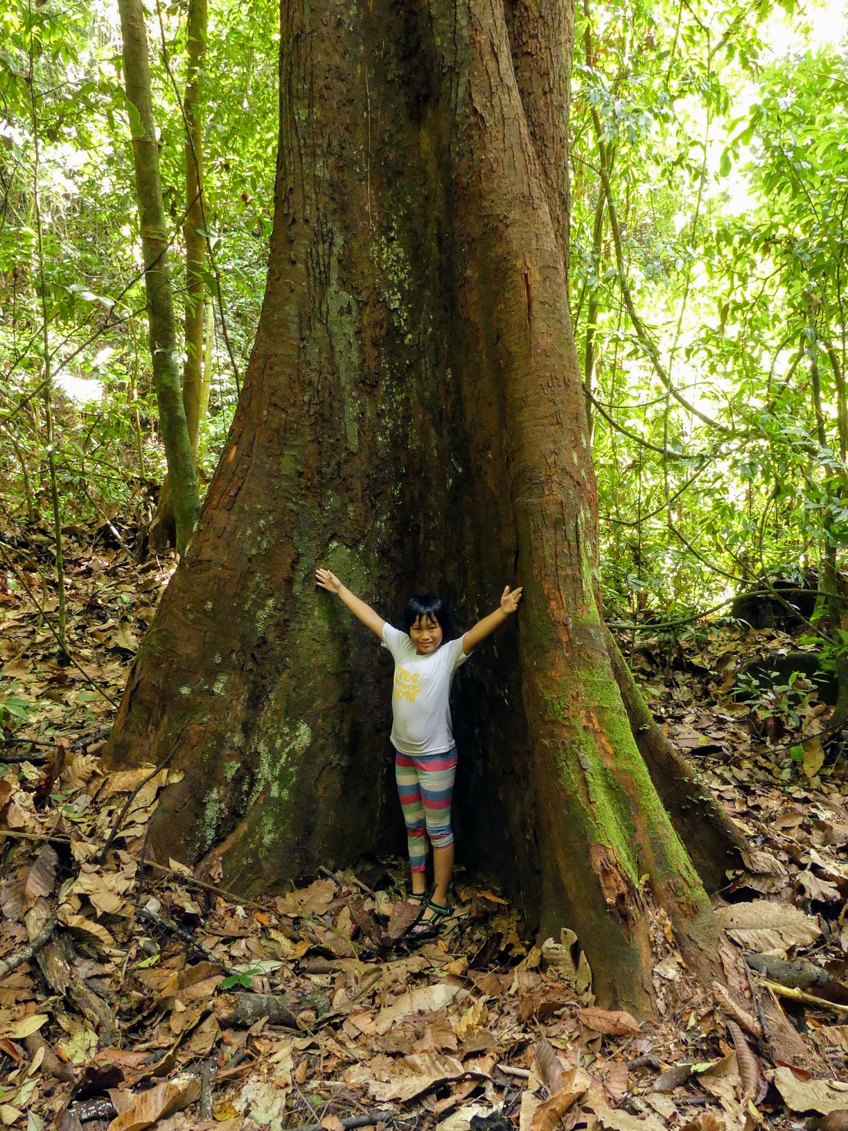 tree-hugging-kid
