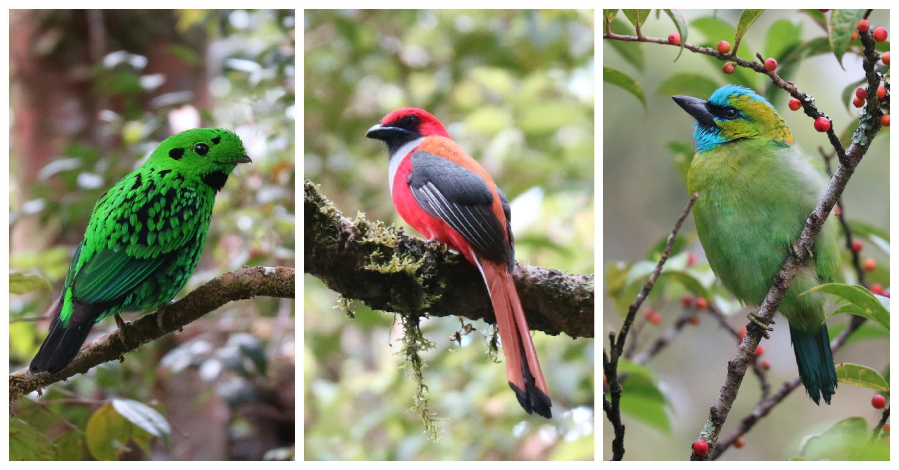 birds at Gumbayong Trail