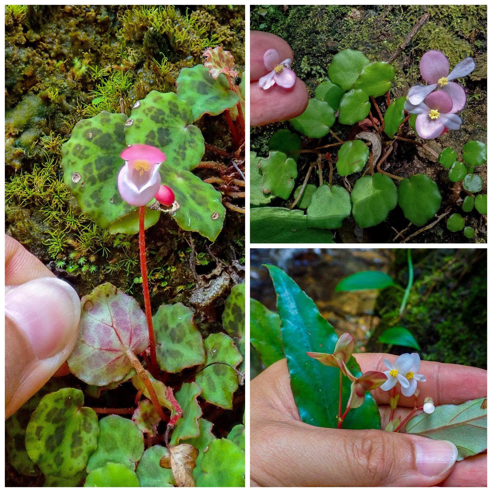 new flora species