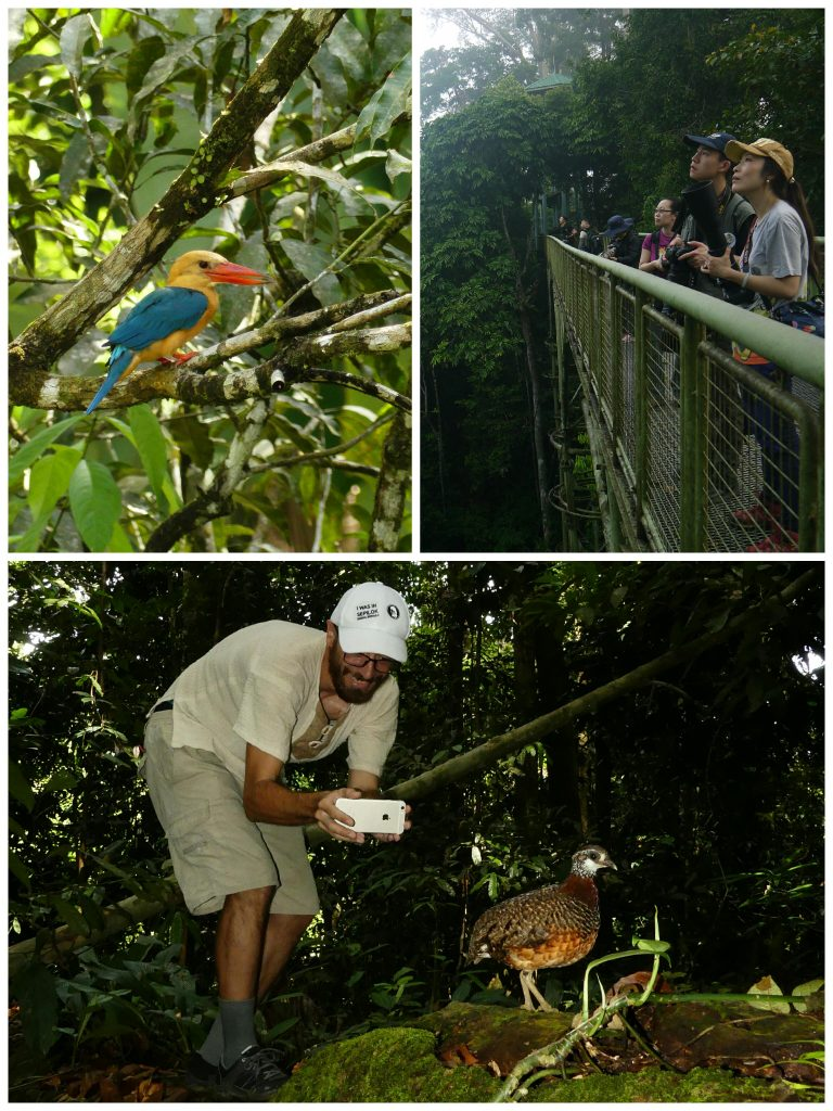 Sandakan wildlife and forests
