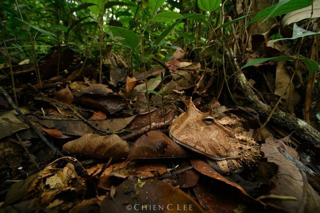 rich frog biodiversity of Ecuador